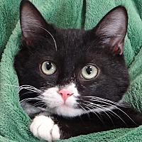 Adopt A Pet :: Russel - Renfrew, PA