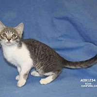 Adopt A Pet :: *SIERRA MIST - Hanford, CA