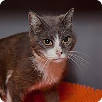 Adopt A Pet :: Gloria - Mission Hills, CA