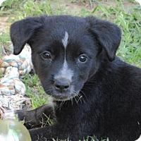 Adopt A Pet :: Tansy CC CP - Providence, RI