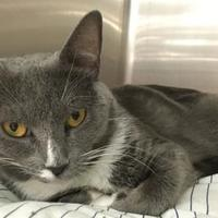 Adopt A Pet :: Cannoli - Blackwood, NJ