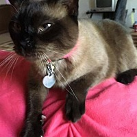 Adopt A Pet :: Tawny - Knoxville, TN