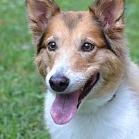 Adopt A Pet :: Molly - White Plains, NY