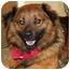 Photo 3 - Keeshond Mix Dog for adoption in Racine, Wisconsin - Bismark