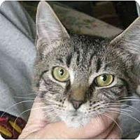 Adopt A Pet :: Flap - Jenkintown, PA