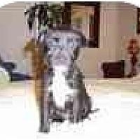 Adopt A Pet :: Felicia - Fostered in CT - Adamsville, TN