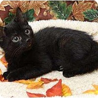 Adopt A Pet :: Perry - Mobile, AL