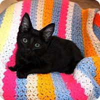 Adopt A Pet :: Monkey - Nolensville, TN