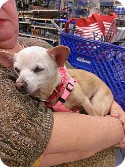 Chihuahua Dog for adoption in Cocoa, Florida - Daisy