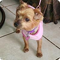Adopt A Pet :: Chloe - Conroe, TX