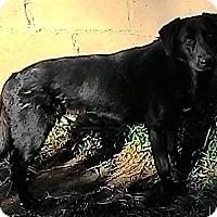 Adopt A Pet :: Penny - San Ysidro, CA