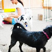 Adopt A Pet :: Trudy - Eugene, OR