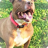 Adopt A Pet :: Bubba - Emmett, MI