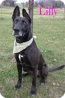 Shepherd (Unknown Type)/Labrador Retriever Mix Dog for adoption in Menomonie, Wisconsin - Lilly