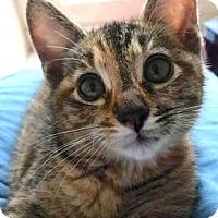Adopt A Pet :: ROXY - Marina Del Ray, CA