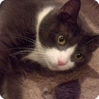 Adopt A Pet :: Pop Warner (LT) - Trenton, NJ