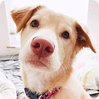 Adopt A Pet :: Kara - San Ramon, CA
