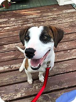 Hound (Unknown Type) Mix Dog for adoption in Akron, Ohio - Duke