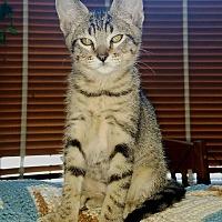 Adopt A Pet :: Little - Modesto, CA