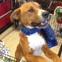 Adopt A Pet :: Brink - Hopkins, SC