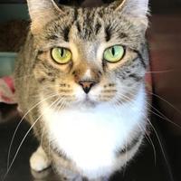 Adopt A Pet :: Garnet - Wellsville, NY
