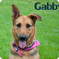 Adopt A Pet :: Gabby - Hamilton, MT