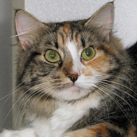 Adopt A Pet :: Romy - Ruidoso, NM