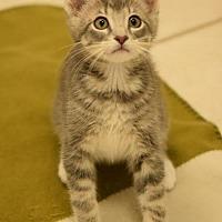 Adopt A Pet :: Tarzan - DFW Metroplex, TX
