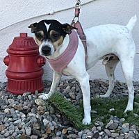 Adopt A Pet :: Vee - Fallbrook, CA
