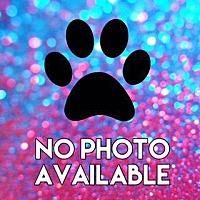 Adopt A Pet :: Hilton - Valparaiso, IN