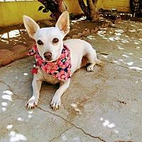 Adopt A Pet :: Monie - San Diego, CA