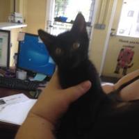Adopt A Pet :: Knick - Crawfordville, FL