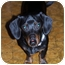 Photo 1 - Dachshund Dog for adoption in Owatonna, Minnesota - Monty
