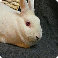 Adopt A Pet :: Ginny - Newport, DE