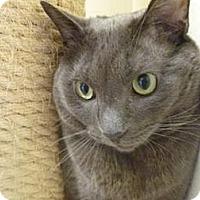 Adopt A Pet :: Aldo - Milwaukee, WI