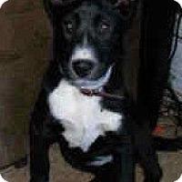 Adopt A Pet :: Cabella - latrobe, PA