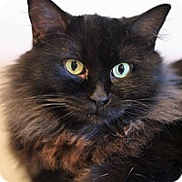 Adopt A Pet :: Tiddlywinks and Mary Mac - Columbia, MD