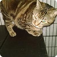 Adopt A Pet :: Gladys - Centralia, WA