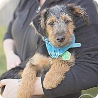 Adopt A Pet :: Raider - Houston, TX