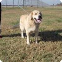 Adopt A Pet :: Riley - Denver, CO
