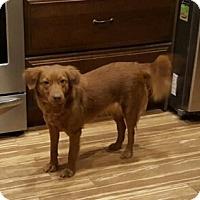 Adopt A Pet :: Texas - Evergreen, CO