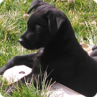 Adopt A Pet :: Peach - Toledo, OH