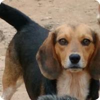 Adopt A Pet :: Rowdy - Lexington, MA