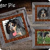 Adopt A Pet :: Sugar Pie ADOPTED - Ontario, ON