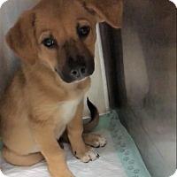 Adopt A Pet :: Aly - Portland, OR
