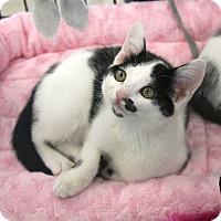 Adopt A Pet :: Milan - Studio City, CA