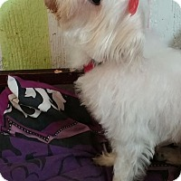 Adopt A Pet :: Fluffy - Crump, TN