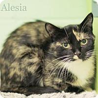 Adopt A Pet :: Alesia - West Des Moines, IA