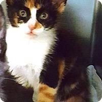 Adopt A Pet :: Ozone - Americus, GA