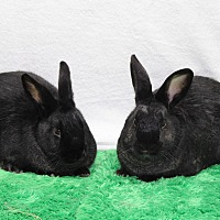 Adopt A Pet :: Andy & Opie - Tustin, CA